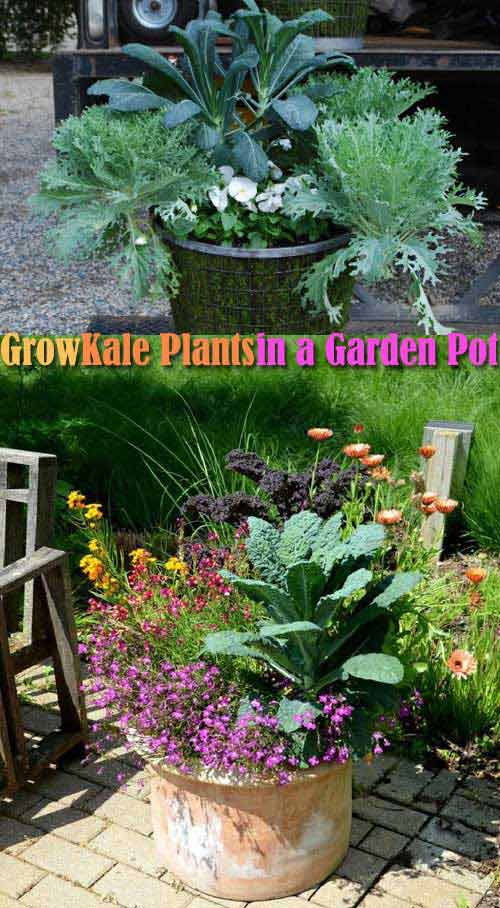 06-Kale-in-container-with-annuals